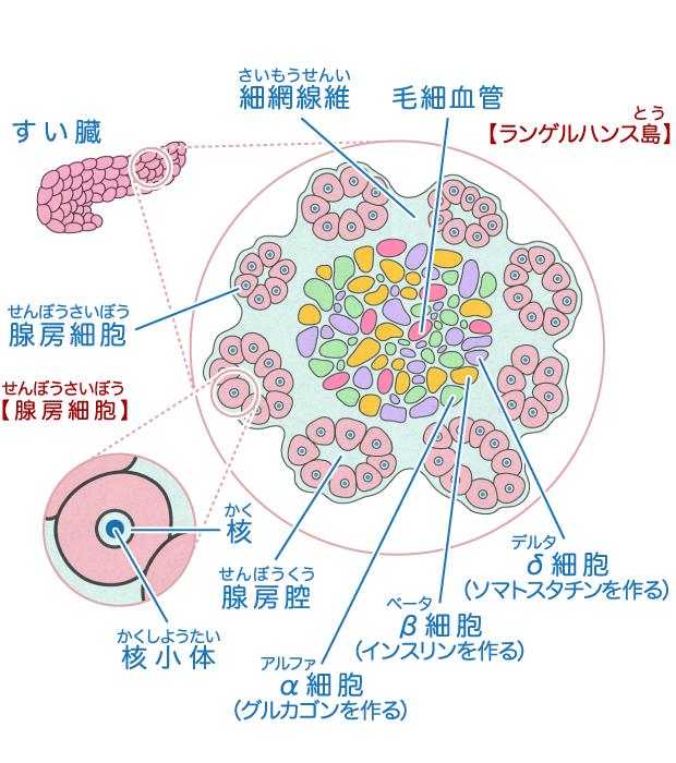 覚え方 看護 消化酵素